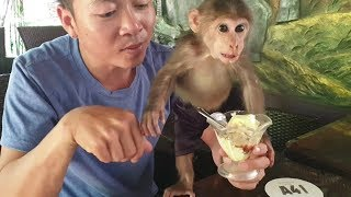 Baby Monkey | Doo Goes To The Coffee Shop And Eats Ice Cream