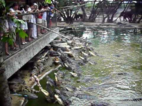 Рыбалка на крокодила
