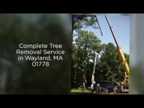 Professional Tree Removal & Pruning in 01778