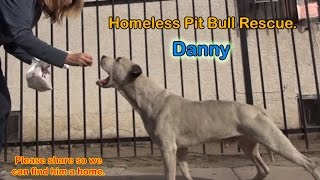 Danny - Homeless Pit Bull gets rescued off the streets.