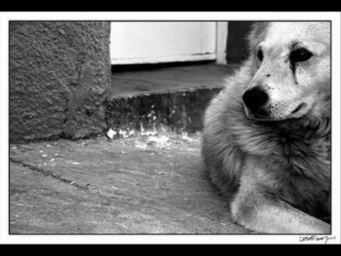 ataque 77 ojos de perro