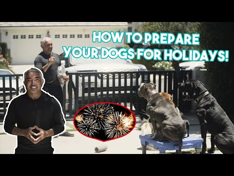 How To Prepare & Keep Your Pets Safe For July 4th Fireworks