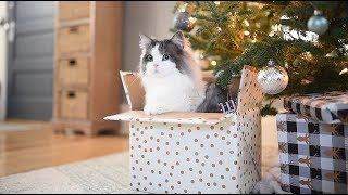 My Cats Favorite Christmas Present EVER! - BOXES