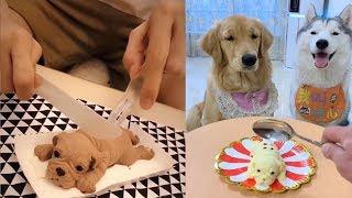 Dog Reaction to Cutting Cake - Funny Dog Cake Reaction Compilation