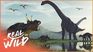 When Dinosaurs Ruled The Earth | Amazing Animals | Real Wild Documentary