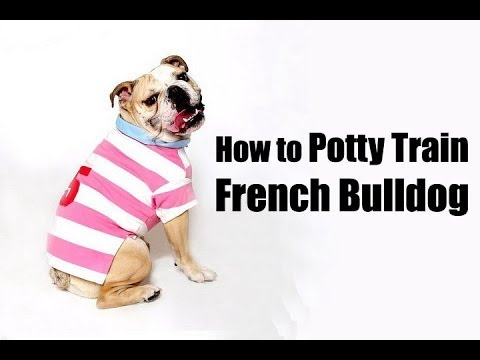 english bulldog potty training mei 2016 best dogs for attack training 5043