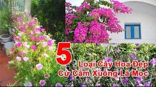 5 Loại Cây Hoa Đẹp Cứ Cắm Xuống Là Mọc
