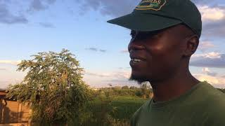 A Day In The Life Of A Farmer In Chinhoyi Chill sport