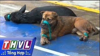 THVL | Công an thành phố Vĩnh Long bắt quả tang 2 đối tượng trộm chó