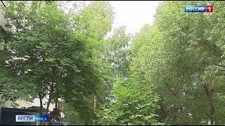 Омичи могут подать заявку на снос аварийных деревьев