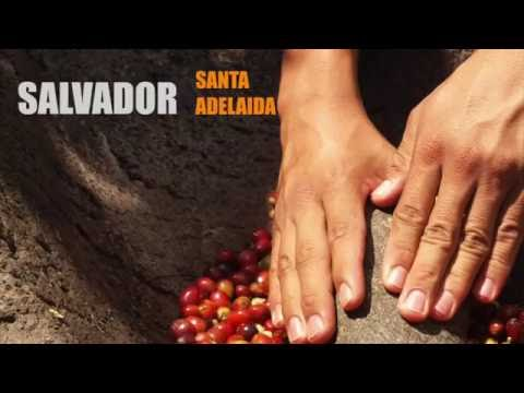 Salvador Red Bourbon Santa Adelaida - Caffè del progetto Sandalj Traceability