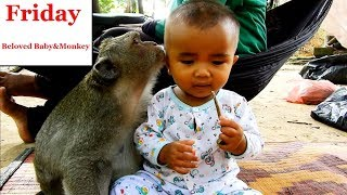 Monkey Sok Concern about human baby losing / she Needs Look after baby