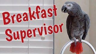 Einstein the breakfast supervisor