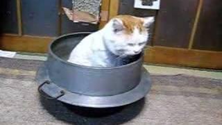かご猫41