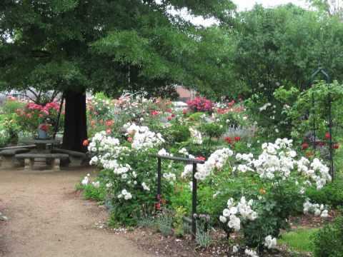 Mcgill Rose Garden Charlotte Nc Youtube