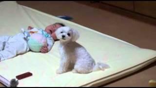 Beba je počela da plače: Pogledajte nevjerovatnu reakciju psa!