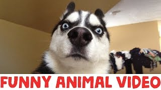 (IMPOSSIBLE) TRY NOT TO LAUGH - FUNNY ANIMAL COMPILATION