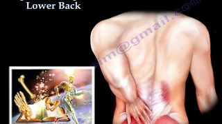 Spine Concepts , Lower Back - Everything You Need To Know - Dr. Nabil Ebraheim