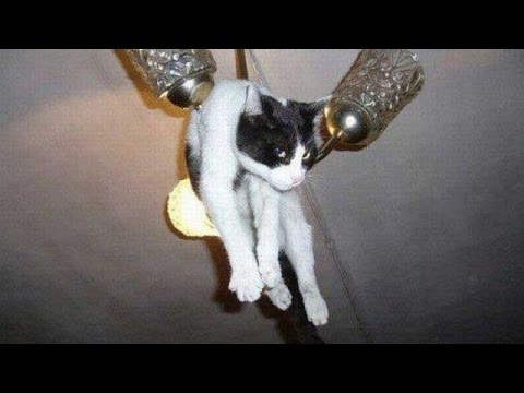 THERE'S 0,1 % chance that YOU won't LAUGH – The best CAT video ever seen