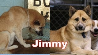 Amazing Transformation of a Shelter Pet  - The Story of Jimmy. Adopt Rescue Foster