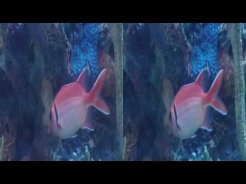Aquarium in Restaurant (YT3D:Enable=True)