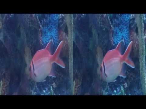 Aquarium in Restaurant (YT3D:Enable=True)