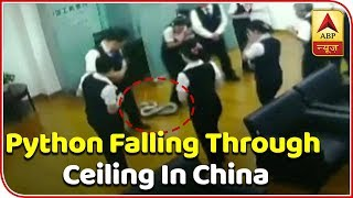 Viral Video: Python Drops From Ceiling During Staff Meetin..