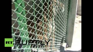Syria: Lions, tigers and mortars at Damascus Zoo