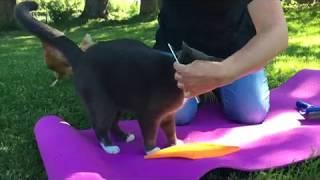 Comportement animal pratique et entrainement de plusieurs espèces