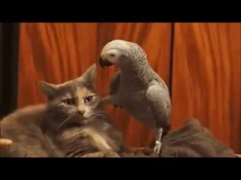 The Best Cat Video Compilation Ever!