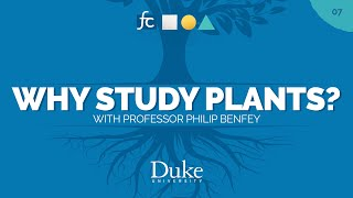 How Roots Develop | Fundamental Concepts with Philip Benfey video