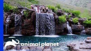 Hồ bơi nhân tạo như ngoài tự nhiên