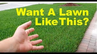 How To Fix An Ugly Lawn | For Beginners