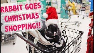 RABBIT GOES CHRISTMAS SHOPPING! 🐰🎄