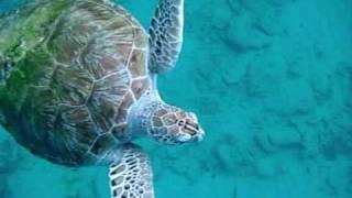 Vacaciones y snorkel