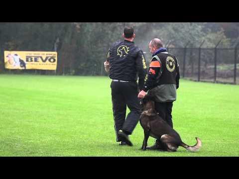 NIK 2015  Erik  Köpp Loco van de Berlex hoeve Protection