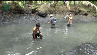 Tát ao bắt cá sau 3 năm thả, thu hoạch khủng - Slap fish ponds | Sắc Màu VN