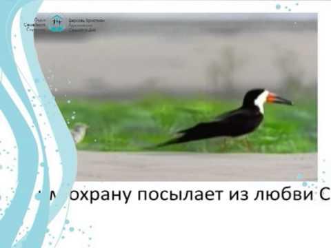 """""""Золотые искры"""""""