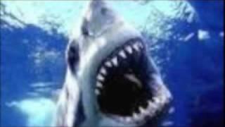 鮫スライドショー3