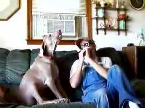 Куче што пее
