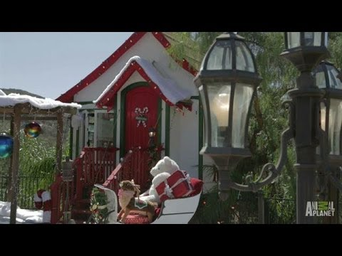 Santa's Sunny Workshop   Treehouse Masters - Smashpipe Entertainment