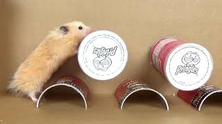 Cute and Funny Hamsters – Best of the Year 2018 Hamster Compilation