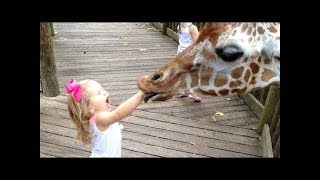 FORGET CATS! Funny KIDS vs ZOO ANIMALS are WAY FUNNIER!   TRY NOT TO LAUGH 1