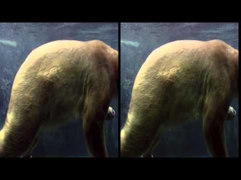 Sony Bravia Asahiyama Zoo Original - 3D Side by Side