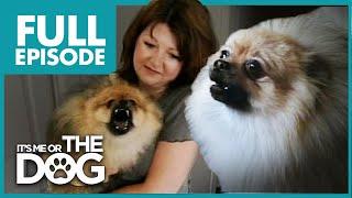 Monster Pomeranian: Teddy Pom-Pom   Full Episode   It's Me or the Dog