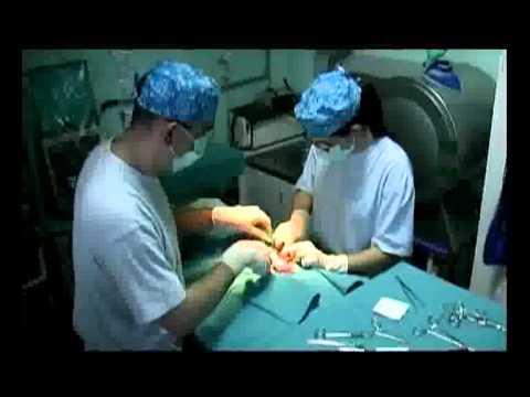 Sterilizacija Macaka