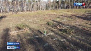 Омская прокуратура начала проверку по факту вырубки деревьев в Чернолучье