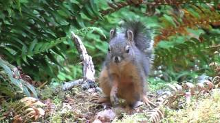 squirrel getting nervous.AVI