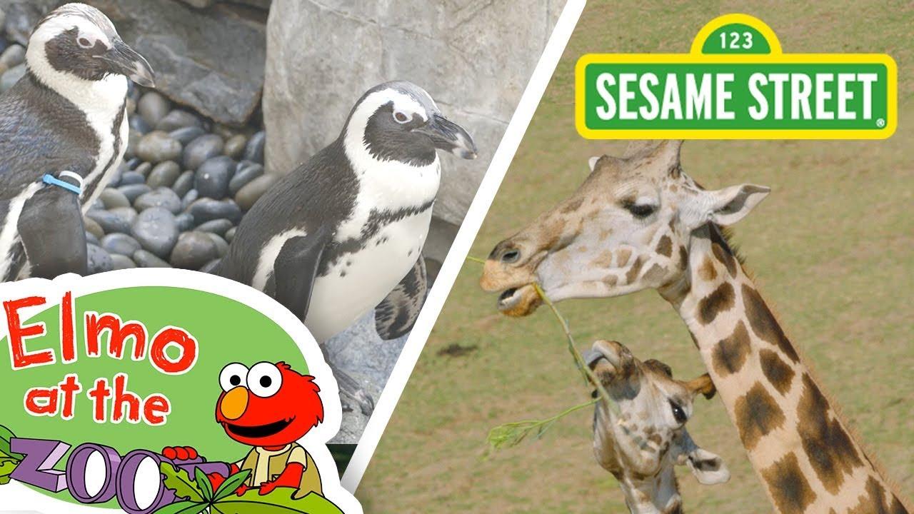 Sesame Street Wild Animals Elmo S World Video Novostink