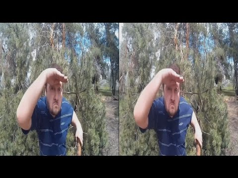 Forest lOONY in 3D . 3D VIDEO